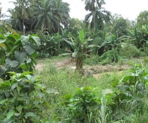 Quando ir a Sokodé: melhor época para visitar
