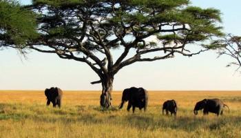 Parque Nacional do Alto Níger