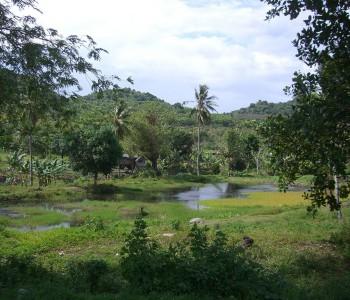 Sulawesi (Celebes)